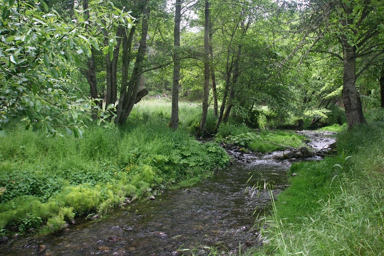Restoration Agriculture: Erosion control planting