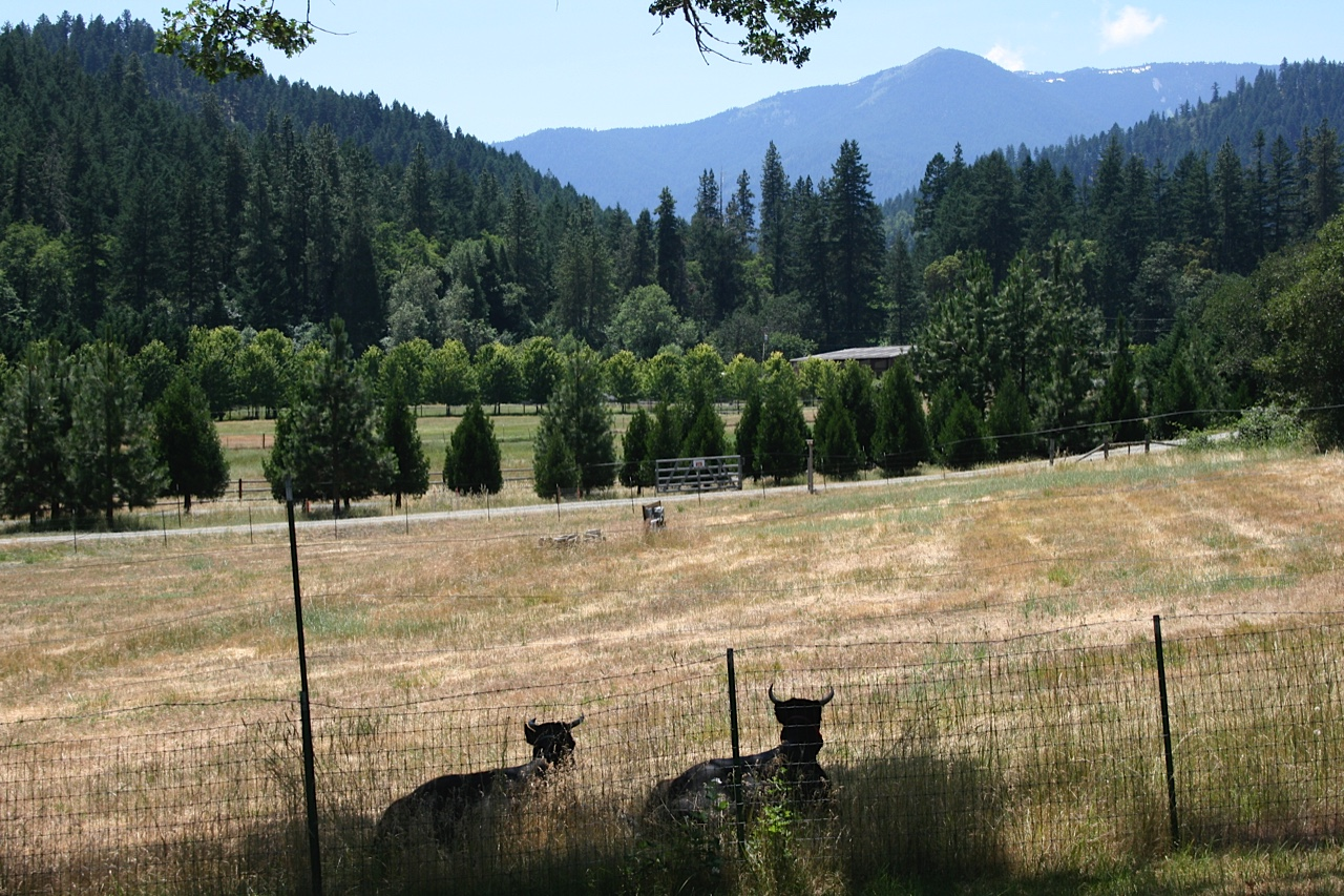 Restoration Agriculture: Pasture with conifer wild break