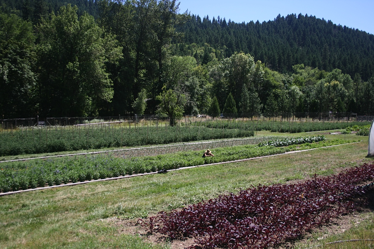 Restoration Agriculture: Seed crops